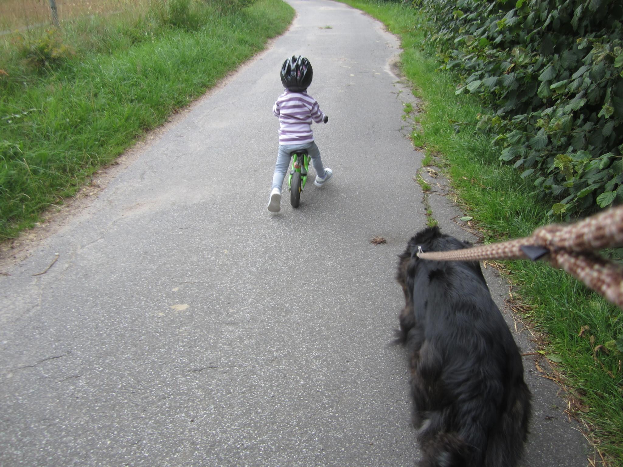 regen hund hinterher ziehen